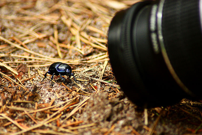 best photography tips for beginners like this image of a camera taking a close-up picture of a bug