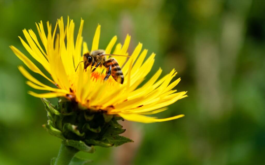 yellow and black bee on yellow flower showing a reverse image search to find duplicate images
